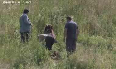 Un urs lovit de mașină a fost eutanasiat după ce a agonizat ore în șir pe marginea drumului, în județul Cluj